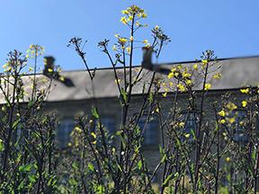 Planterne gror af vellyst i Fattiggårdens have